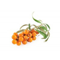 Dehydrated Seabuckthorn Whole